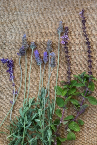 tulsi-and-lavender.jpg
